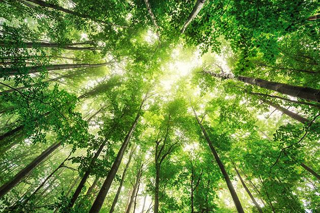 ecoembes-y-el-medio-ambiente