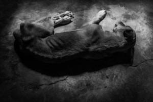 hambriento-descansa-Foto-Ignacio-Marin_EDIIMA20181205_0822_19